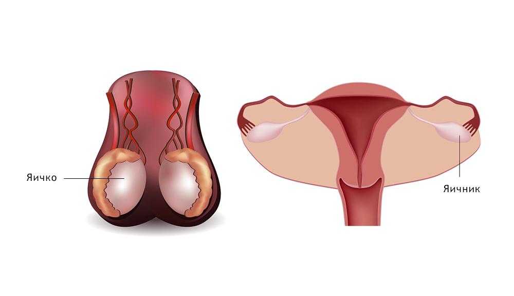 Женские гениталии в сперме корпоратив