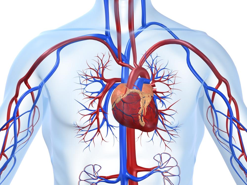 Ишемия сердца симптомы и секс