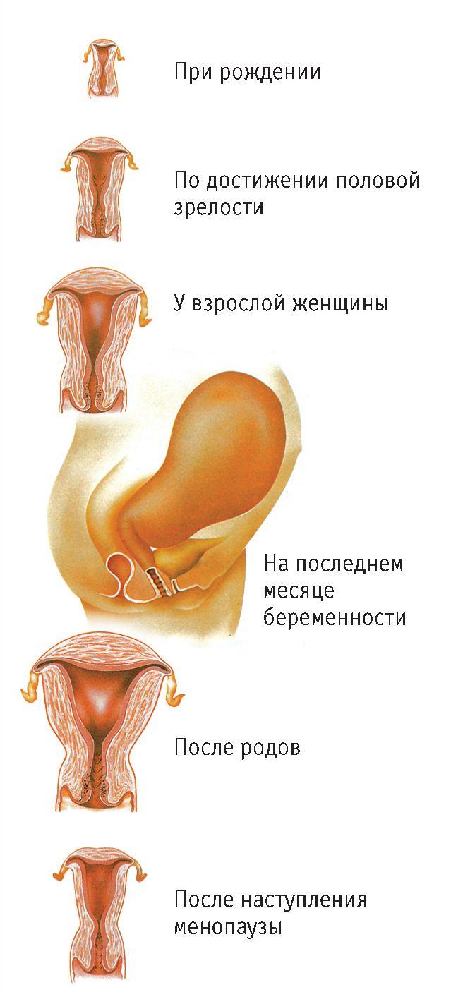 Женские организм видео 4 фотография