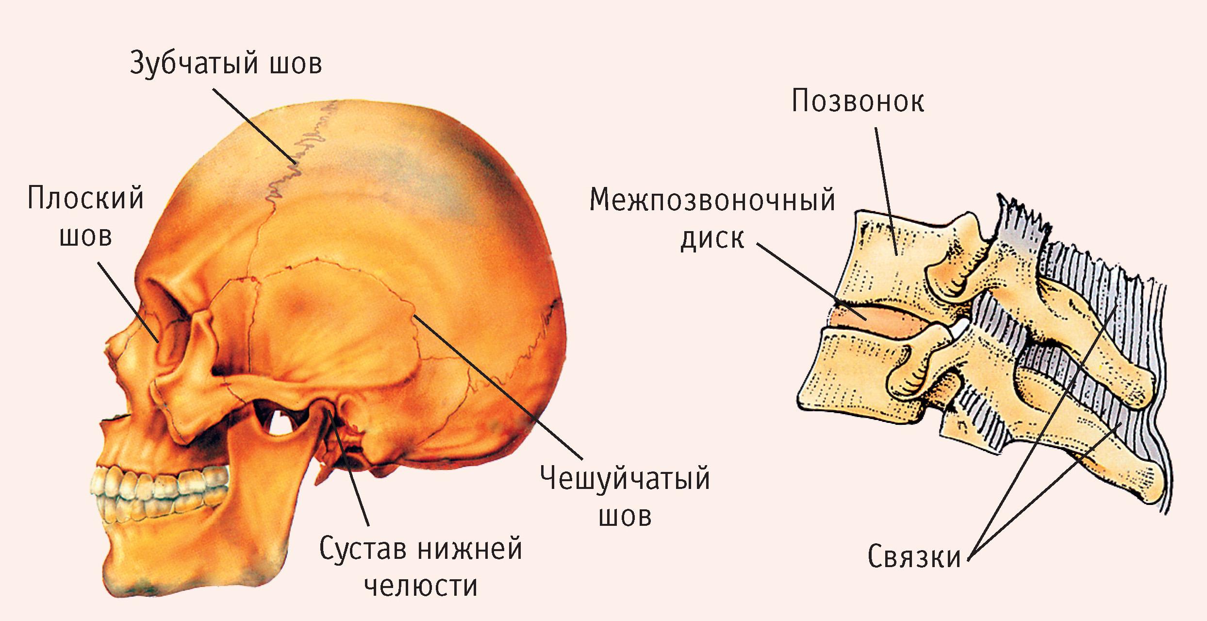 Сустав Плоский